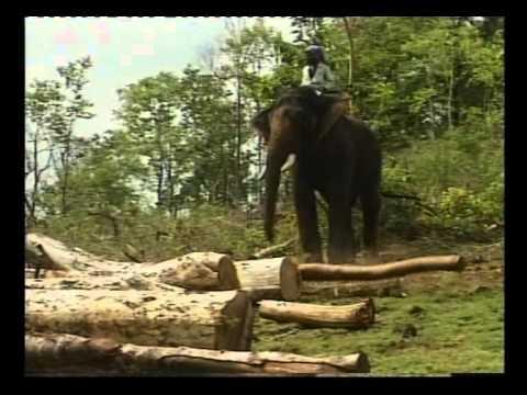 ELEPHANT - GOD OR DESTROYER