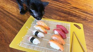 We made SUSHI for our cat's second birthday!
