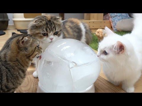 고양이에게 대왕 얼음을 줘봤다