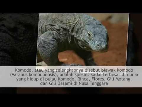 TUGAS GEOGRAFI | XI SOS 2 | FLORA & FAUNA DI INDONESIA | SMA N 1 LEMBANG