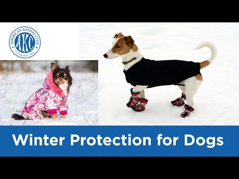 Winter Protection for Dogs - Vet Tips with Dr. Klein