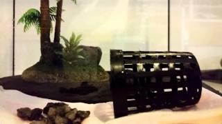 Triops aquarium einrichten