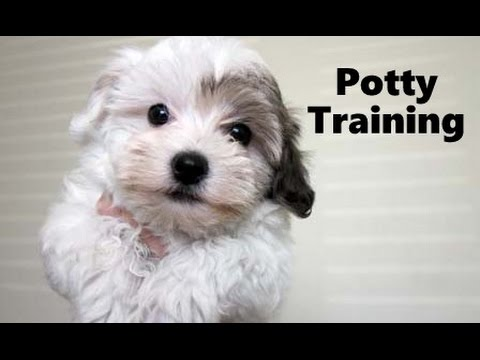 Easy Potty Training Tips For Dogs