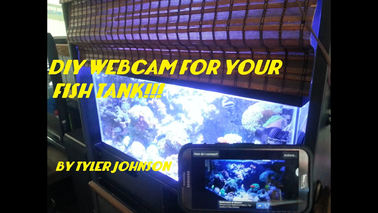 FREE DIY WEBCAM FOR YOUR FISH TANK