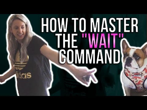 "HOW TO MASTER THE ""WAIT"" COMMAND"