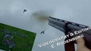 damage control on Geese / Schadebestrijding op ganzen