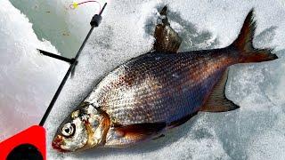 Ловля Леща на можайсков водохранилище Ловля леша со льда на кивковую удочку Рыбалка 2021 Горетово