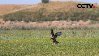 《新中国的第一》 第一个自然保护区 | CCTV