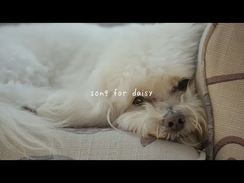 gnash - song for daisy