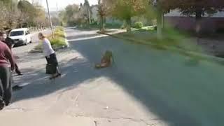 """Собака """"вбивця"""" в Перемишлянах"""