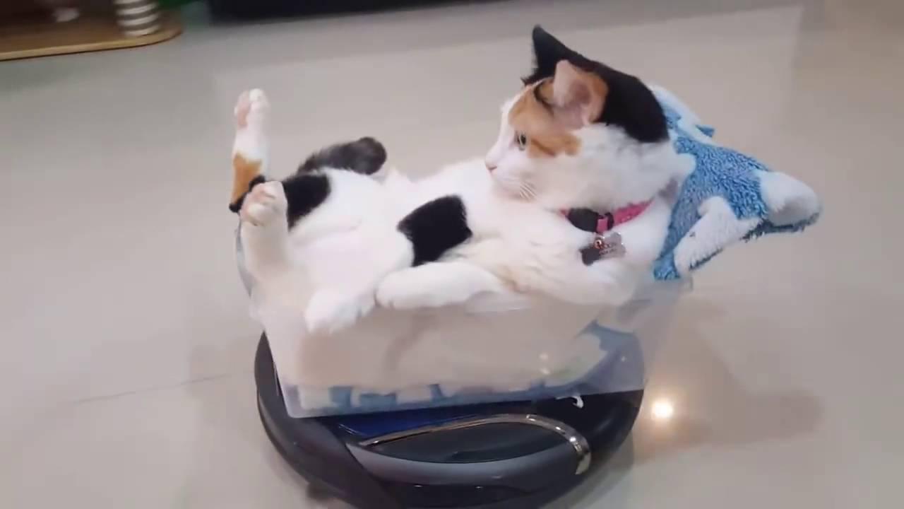 Gato Da Un Paseo Sobre Una Aspiradora Roomba Videos