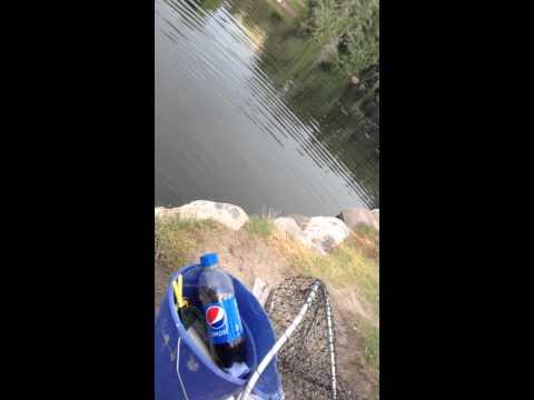 Part 3 fishing the cove pond in herriman utah