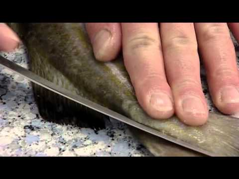 How to Fillet an Atlantic Cod | 406
