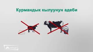 КУРМАН АЙТТЫН ЭРЕЖЕСИ  2017 / КАНАЛГА ЖАЛЫНЫЗДАР