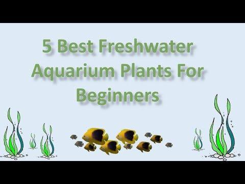 5 Best Freshwater Aquarium Plants For Beginners