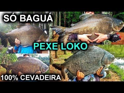 O FANTÁSTICO PESQUEIRO PEXE LOKO / PARAÍSO DA CEVADEIRA