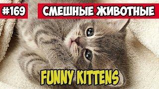 Смешные котята. Смешные животные, Funny vines подборка 169.