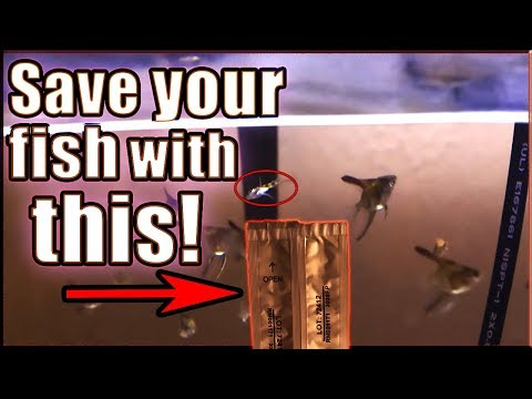 USE THIS TO SAVE YOUR FISH!