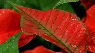 Mahima Mahima...  Hindi Christian Song