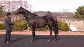 バゴ(Bago)-JBBA日本軽種馬協会種牡馬展示会2015