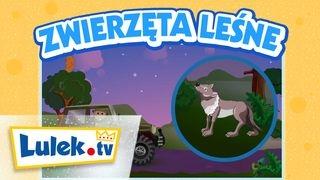 Zwierzęta leśne I Rymowanki o zwierzętach dla dzieci I Lulek.tv