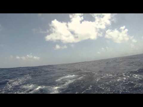 Mahi Mahi Offshore fishing Barbados