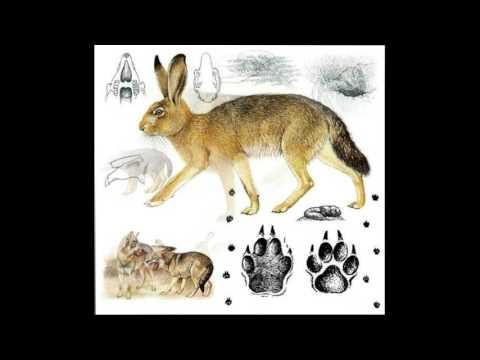 Как нарисовать следы невиданных зверей
