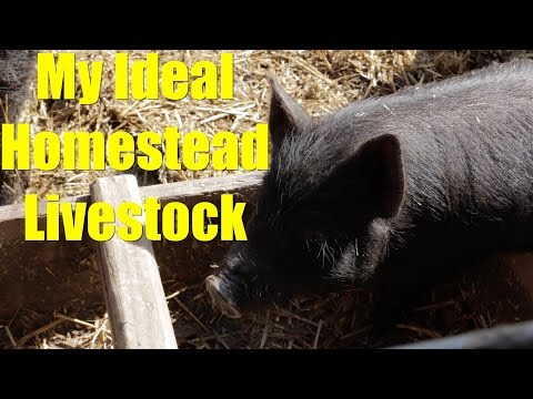 My Ideal Homestead Livestock