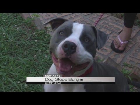 Dog saves neighbor from burglary, beating