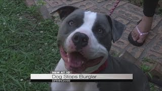 Dog saves neighbor from burglary, beating