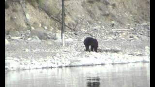 Охота на медведя на Ба...