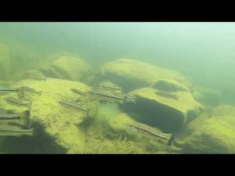 Diving Kezar Lake