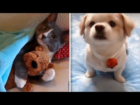 Funniest Animals ? - Best Of The 2020 Funny Animal Videos