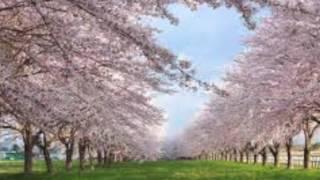 美人で男前の音楽家の青島ゆり子さんが作曲したとてもメロディラインの...