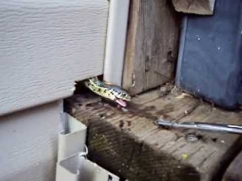 Awesome Garter snake