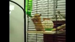 [help] Hamster Chewing Cage Bars.