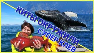 Рыбалка на Камчатке Киты горбачи удачный улов