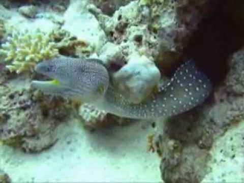 Scuba diving safari southern Egypt