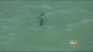 Shark Sightings Have Forced Lifeguards Close Orange County Beaches