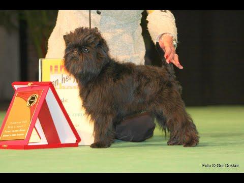 Veteran dog show