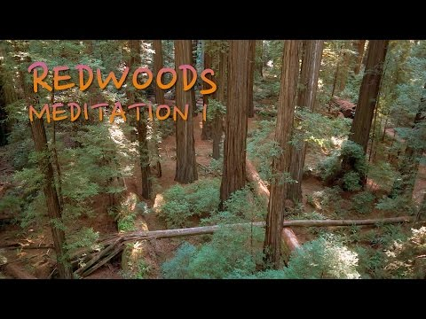 Giant Redwoods Meditation 1 - Aerial Views