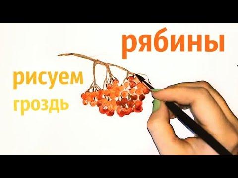 Энциклопедия растений: Рябина