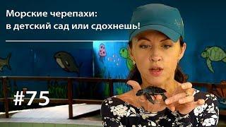 Морские черепахи: в детский сад или сдохнешь! // Всё как у зверей #75