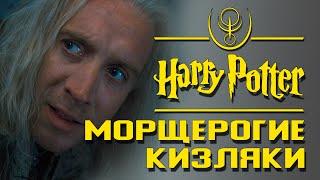 Морщерогие кизляки. Правда или вымысел? | Misterium - Harry Potter