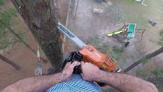 Pine Tree Removal - No Editing - Tree Climber