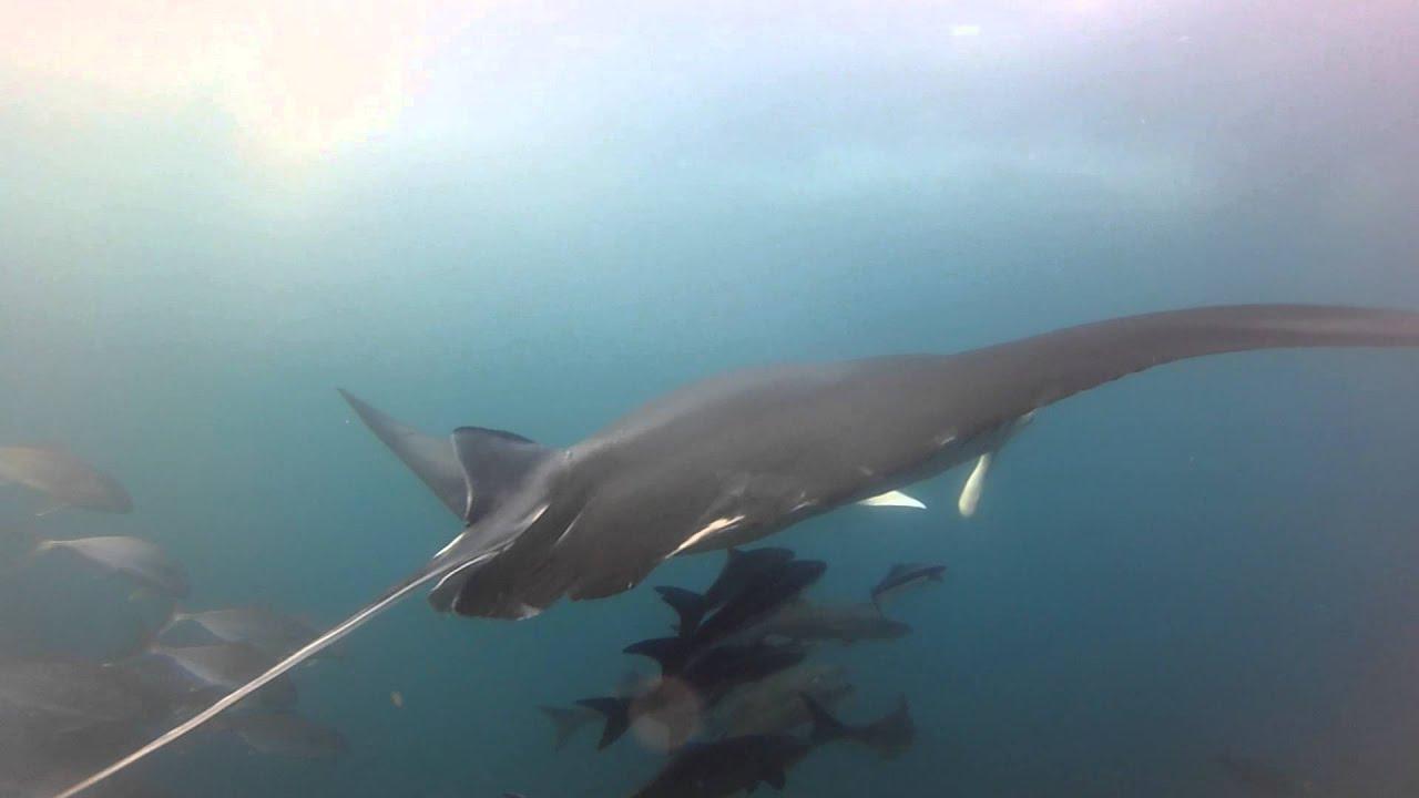 To dive for at julian rocks byron bay 18 01 15 youtube - Dive byron bay ...