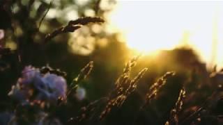 LDD / Beauty in simplicity / красивое видео под музыку