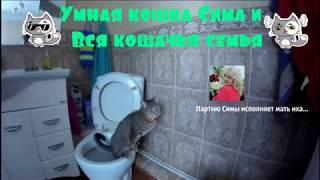 Умная кошка Сима. И вся кошачья семья