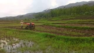 Budi daya tanaman - Cara membajak sawah