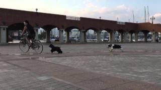 いつも通りの自転車を使ってのトレーニングです。 マイルは走る事がとに...
